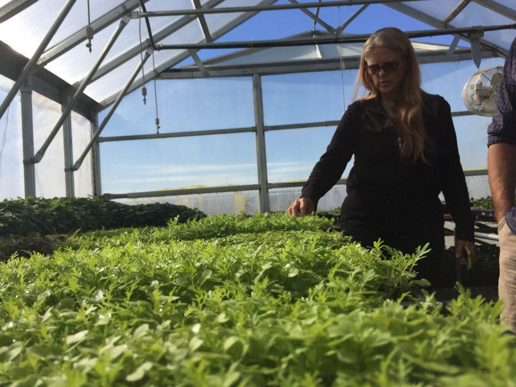 greenhouse farm